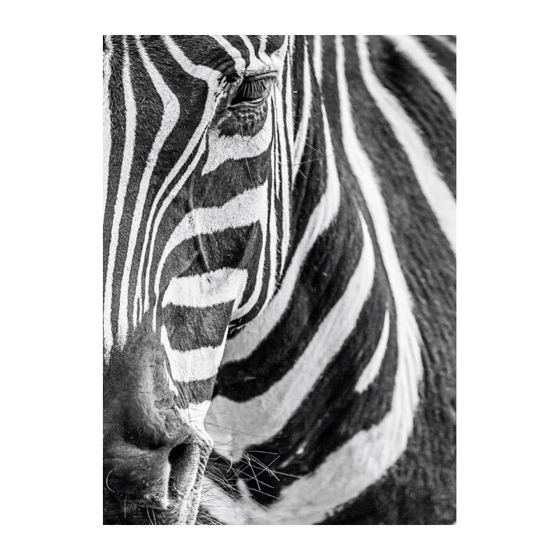 Tableau z bre d coration murale plexiglas haute qualit for Deco murale zebre