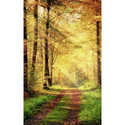 Wallpaper forest in automn