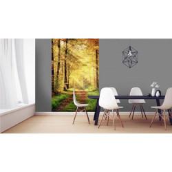 Poster mural forêt en automne