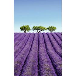 Papier peint panoramique paysage de Provence avec champ de lavande