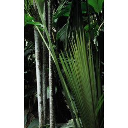 Tenture murale jungle sombre avec plantes vertes géantes