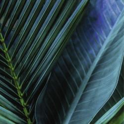 Tableau feuille de palmier