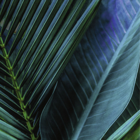 Tableau TROPICAL LEAF