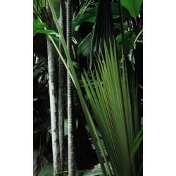 Brise vue jungle végétation luxuriante