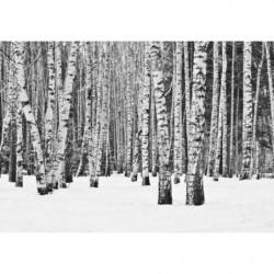Papier peint panoramique forêt noir et blanc