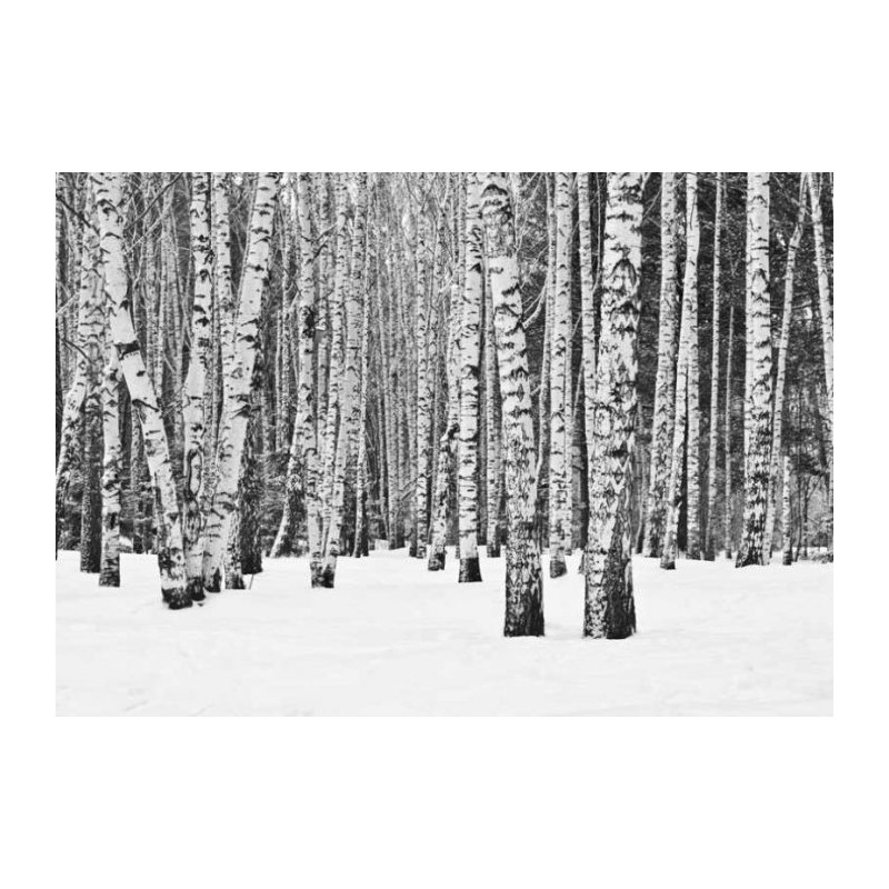 Papier peint BLACK AND WHITE FOREST