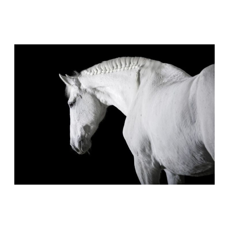 Poster BLACK AND WHITE HORSE