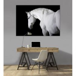 Poster cheval noir et blanc
