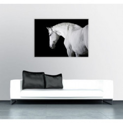 Black and white horse poster