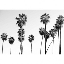 Tableau BLACK AND WHITE PALM
