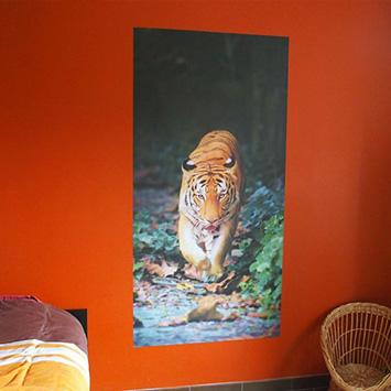 Poster tigre chez Aude