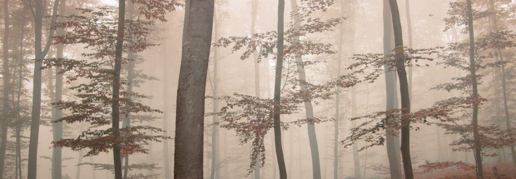 Décoration murale Marron