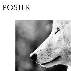Poster animaux