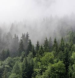 Tableau brume en forêt