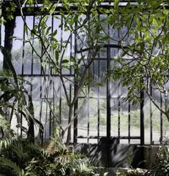 Tableau mural jungle sous verrière