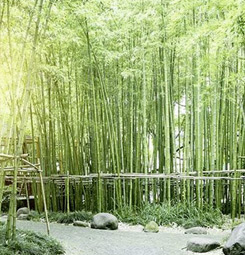 Poster forêt de bambous d'Asie