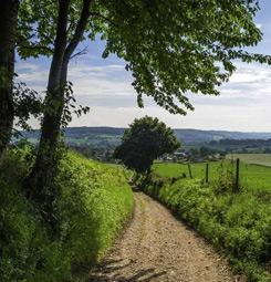 Papier peint chemin dans la campagne