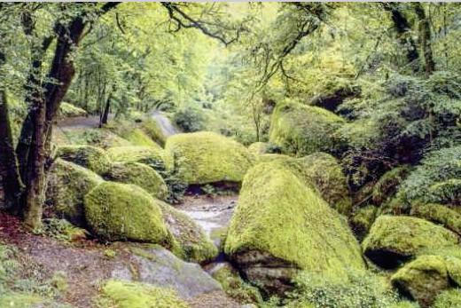 Poster forêt verdoyante