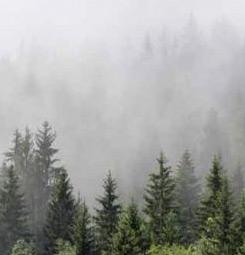 Tenture suspendue brume en forêt
