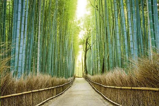 Poster bambous zen