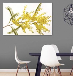 Tableau mimosa jaune