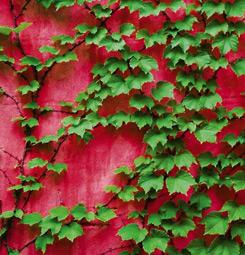 Mur végétal rouge et vert