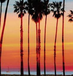 Papier peint Santa Monica