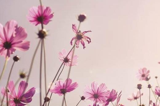 Papier peint rose fleuri
