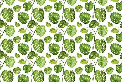Papier peint philodendron vert