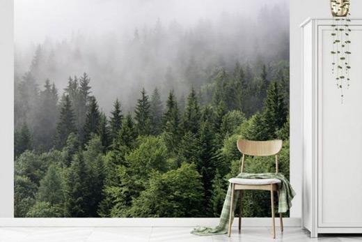 Papier peint brume en forêt