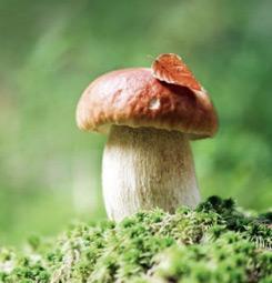 Tableau champignon