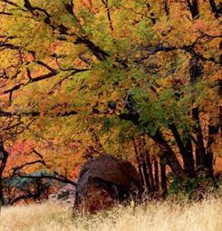 Tableau photo forêt d'automne