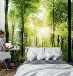 Papier peint chambre forêt verdoyante