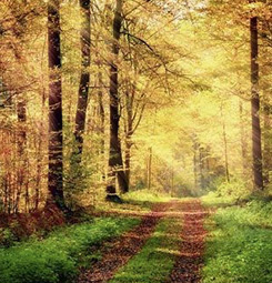 Papier peint forêt d'automne