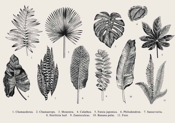 Tableau gravure herbier ancien