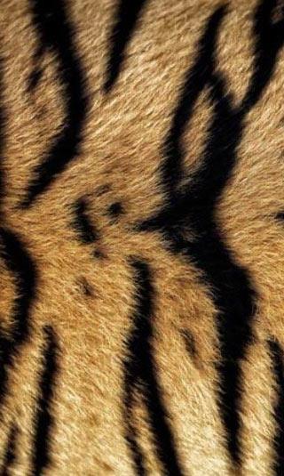 Poster fourrure de tigre orange et noir