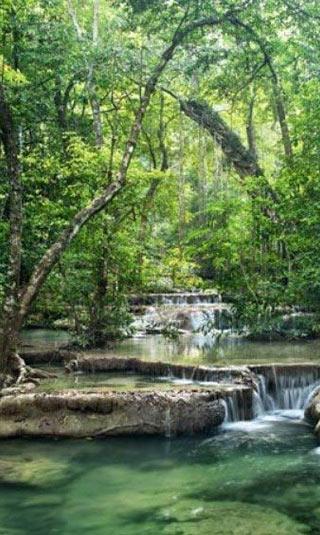 Tenture suspendue La forêt d'emeraude