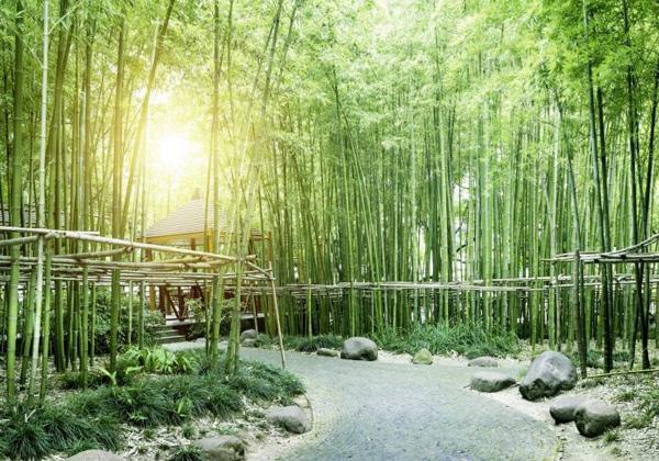 Poster bambous verts