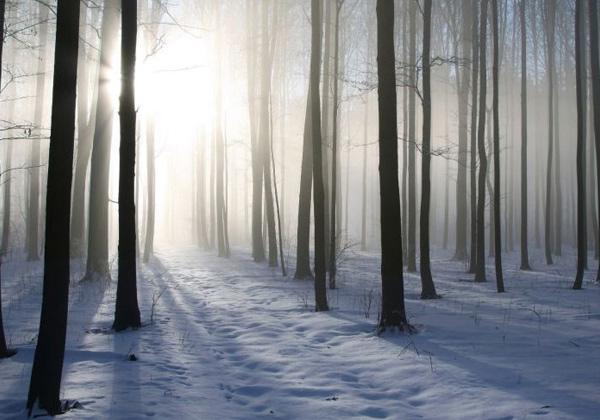 Tableau forêt enneigée