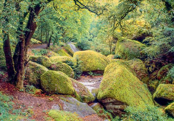 Poster forêt et rivière