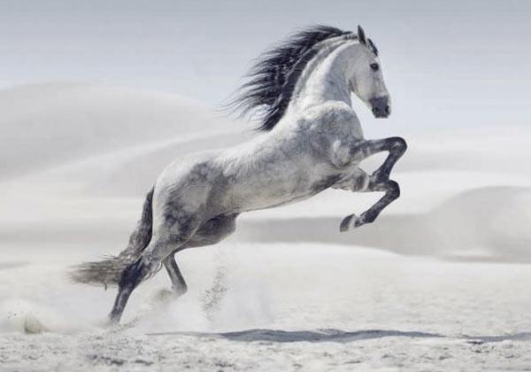 Tableau mural cheval