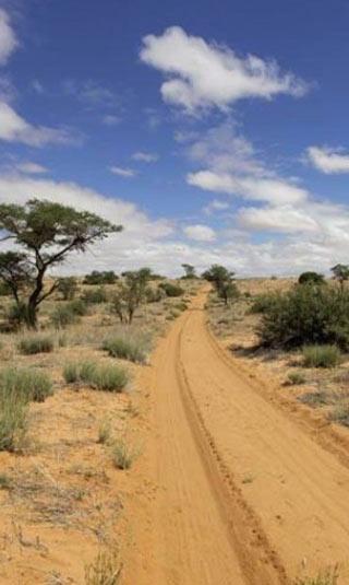Poster géant chemin dans le désert de sable