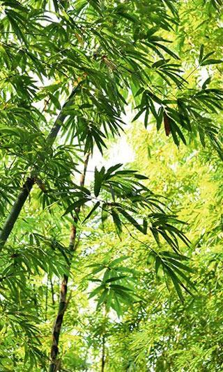 Tenture suspendue bambou moso