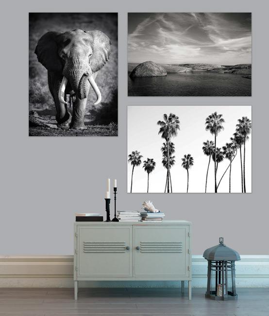 Nos décorations murales Nature en noir et blanc