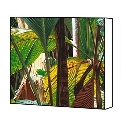 Tableau tropical